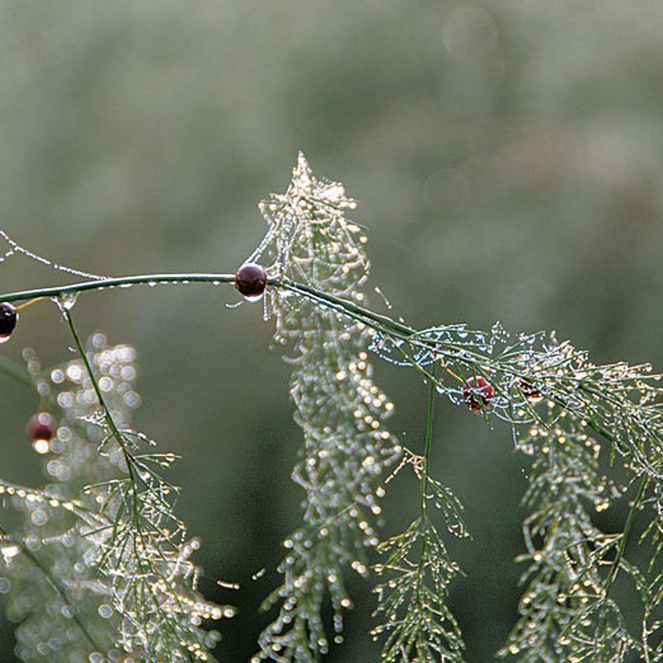 gronarena