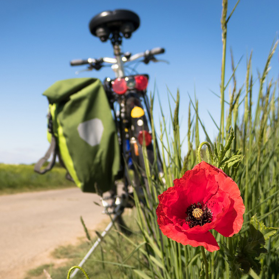 beskuren cykelutveckling våxtorp