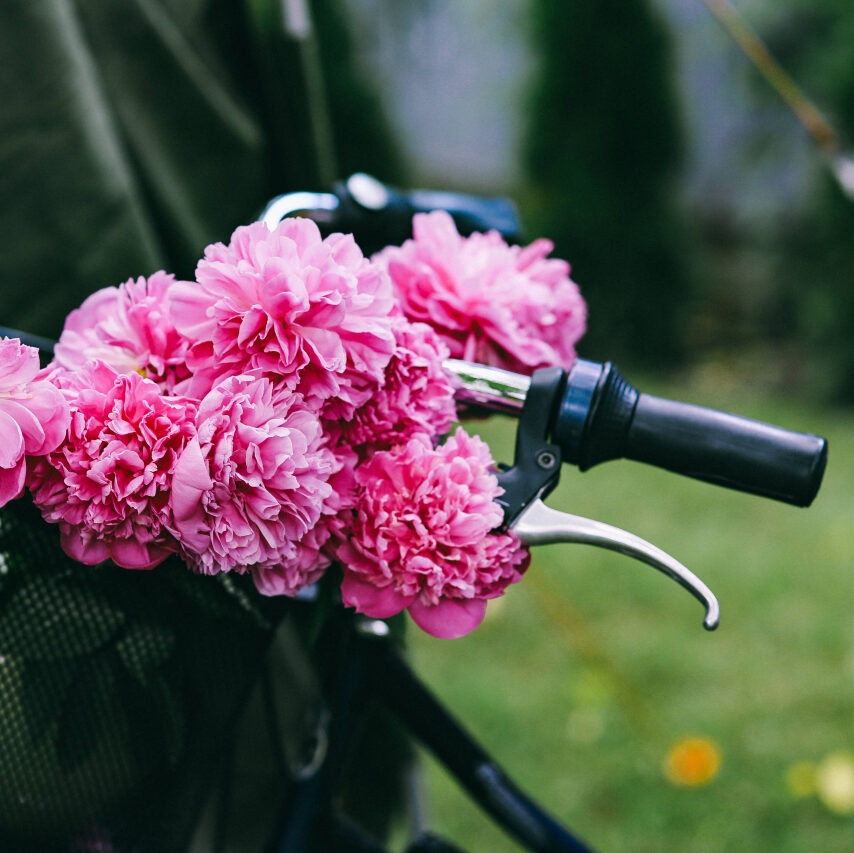 kaboompics_Beautiful pink flowers in a bicycle basket